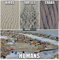 Memes, Birds, and 🤖: BIRDS  TURTLES  CRABS  THEMIND UNLEASHED  HUMANS Humanos.