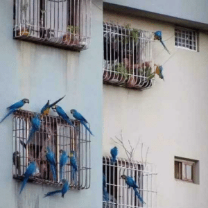 Birds visiting humans stuck in cages: Birds visiting humans stuck in cages