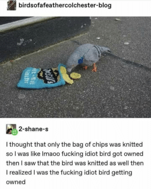 Fucking, Reddit, and Saw: birdsofafeathercolchester-blog  2-shane-s  I thought that only the bag of chips was knitted  so I was like Imaoo fucking idiot bird got owned  then I saw that the bird was knitted as well then  I realized I was the fucking idiot bird getting  owned  E al how to knit