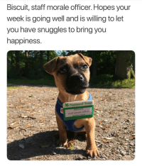 <p>Thank you Biscuit :)</p>: Biscuit, staft morale officer. Hopes your  week is going well and is willing to let  you have snuggles to bring you  happiness.  2& National Trust  ISCUIt <p>Thank you Biscuit :)</p>