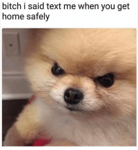 Bitch, Funny, and Tumblr: bitch i said text me when you get  home safely