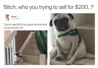 "I'm deadd😂😂: Bitch, who you trying to sell for $200..?""  Grace  V  @greciamxo  Pug for sale $200 he's good with kids and  house trained Lmk I'm deadd😂😂"