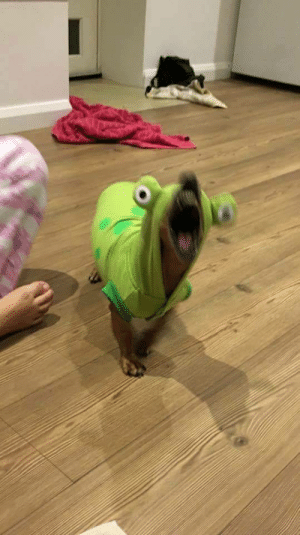 bitchesaloud:   that caterpillar is angry af : bitchesaloud:   that caterpillar is angry af