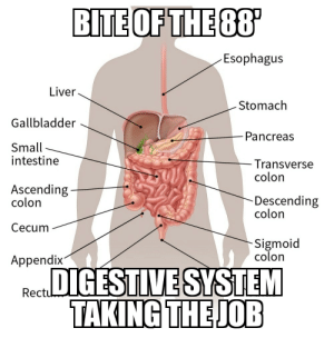 You may or may not get this meme retard.: BITE OF THE 88  Esophagus  Liver.  Stomach  Gallbladder  Pancreas  Small  intestine  -Transverse  colon  Ascending  colon  Descending  colon  Cecum  Sigmoid  colon  Appendix  RecuDIGESTIVE SYSTEM  TAKING THE JOB You may or may not get this meme retard.
