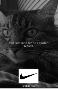 Reason, Them, and Bite: Bite someone for no apparent  reason.  Just bite them Must like spontaneous
