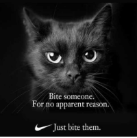 Just Do It, Reason, and Them: Bite someone.  or no apparent reason  F  .  Just bite them. Just do it