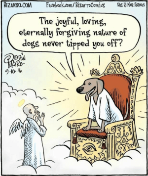 Dogs, Facebook, and facebook.com: BIZARRO.COM Facebook.com/BizarroComics ViKng featves  The joyful, loving,  eternally forgiving nature of  dogs never tipped you off?  Ro One can only hope