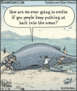 How are we ever going to evolve?: BIZARROCOMICS.COM  Facebook.com/BizarroComics  How are we ever going to evolve  if you people keep pushing us  back into the ocean?  OPAN  HRƏRO.  3.7.13  Dist Y King Features How are we ever going to evolve?