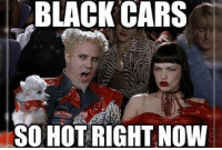 Dank, 🤖, and Hot: BLACK CARS  SO HOT RIGHT NOW