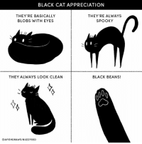Cats, Instagram, and Memes: BLACK CAT APPRECIATION  THEY'RE BASICALLY  BLOBS WITH EYES  THEY'RE ALWAYS  SPOOKY  THEY ALWAYS LOOK CLEAN  BLACK BEANS!  @AFISHDRAWS/BUZZFEED Black cats are the best!   By https://www.instagram.com/afishdraws/