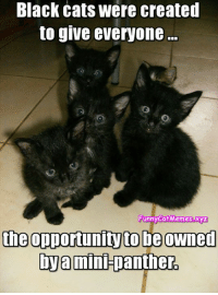 From Funny Cat Memes: Black cats were created  to give everyone...  Funny Cat Memes.xyz  the opportunityto be owned  bya  mini-panther. From Funny Cat Memes