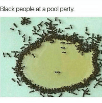 Fire, Memes, and Party: Black people at a pool party One or two man in the shallow end and everyone else wants to sit round the edge 😂🤣🤣😭💯 PoolParty _ _ FOLLOW: ➡➡➡@_IM_JUST_THAT_GUY_____ ⬅⬅⬅ for daily fire posts 🔥🤳🏼