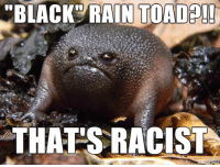 "Blackie, the Black Rain Toad, who thinks everything is racist: ""BLACK RAIN TOAD  THATS RACIST Blackie, the Black Rain Toad, who thinks everything is racist"