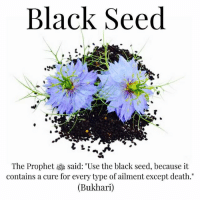 "Benefits of Black Seed: . . • Analgesic: Relieves or dampens sensation of pain. • Anthelmintic: (Also know as vermicide or vermifuge) destroys and expels intestinal worms. • Anti-bacterial: Destroys or inhibits the growth of destructive bacteria. • Anti-Inflammatory: Reduces inflammation. • Anti-Microbial: Destroys or inhibits the growth of destructive microorganisms. • Antioxidant: Prevents or delays the damaging oxidisation of the body's cells - particularly useful against free radicals. • Anti-Pyretic: (Also known as ferbrifuge) - exhibits a 'cooling action', useful in fever reduction. • Anti-spasmodic: Prevents or eases muscle spasms and cramps. • Anti-tumour: Counteracts or prevents the formation of malignant tumours* • Carminative: Stimulates digestion and induces the expulsion of gas from the stomach and the intestines. • Diaphoretic: Induces perspiration during fever to cool and stimulate the release of toxins. • Diuretic: Stimulates urination to relieve bloating and rid the body of any excess water. • Digestive: Stimulates bile and aids in the digestive process. • Emmenagogue: Stimulates menstrual flow and activity. • Galactogogue: Stimulates the action of milk in new mothers. • Hypotensive: Reduces excess blood pressure. • Immunomodulator: Suppresses or strengthens immune system activity as needed for optimum balance. • Laxative: Causes looseness or relaxation of the bowels. .: Black Seed  The Prophet said: ""Use the black seed, because it  contains a cure for every type of ailment except death.  (Bukhari) Benefits of Black Seed: . . • Analgesic: Relieves or dampens sensation of pain. • Anthelmintic: (Also know as vermicide or vermifuge) destroys and expels intestinal worms. • Anti-bacterial: Destroys or inhibits the growth of destructive bacteria. • Anti-Inflammatory: Reduces inflammation. • Anti-Microbial: Destroys or inhibits the growth of destructive microorganisms. • Antioxidant: Prevents or delays the damaging oxidisation of the body's cells - particularly useful against free radicals. • Anti-Pyretic: (Also known as ferbrifuge) - exhibits a 'cooling action', useful in fever reduction. • Anti-spasmodic: Prevents or eases muscle spasms and cramps. • Anti-tumour: Counteracts or prevents the formation of malignant tumours* • Carminative: Stimulates digestion and induces the expulsion of gas from the stomach and the intestines. • Diaphoretic: Induces perspiration during fever to cool and stimulate the release of toxins. • Diuretic: Stimulates urination to relieve bloating and rid the body of any excess water. • Digestive: Stimulates bile and aids in the digestive process. • Emmenagogue: Stimulates menstrual flow and activity. • Galactogogue: Stimulates the action of milk in new mothers. • Hypotensive: Reduces excess blood pressure. • Immunomodulator: Suppresses or strengthens immune system activity as needed for optimum balance. • Laxative: Causes looseness or relaxation of the bowels. ."
