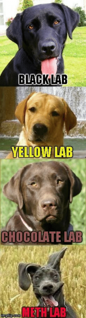 Animals, Dogs, and Memes: BLACKLAB  YELLOW LAB Dog Memes Of The Day 32 Pics – Ep37 #dogs #doglovers #lovelyanimalsworld - Lovely Animals World