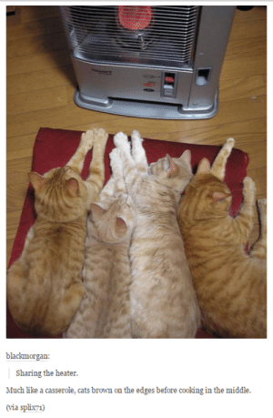 Cats, Omg, and Tumblr: blackmorgan  Sharing the heater.  Much like a casserole, cats brown on the edges before cooking in the middle.  (via splix71) Cooked to purr-fectionomg-humor.tumblr.com