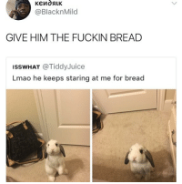 😂Damn, give the cute bunny the bread.: @BlacknMild  GIVE HIM THE FUCKIN BREAD  ISSWHAT @TiddyJuice  Lmao he keeps staring at me for bread 😂Damn, give the cute bunny the bread.