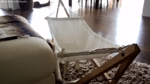Tumblr, Blog, and Hammock: bladdersailor: sushinfood:  the-dodo:  This cat is DETERMINED to nap in his hammock.  i believed in this cat and was not let down   @vitamin-kel-c please show Randy