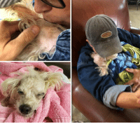 Animals, Beautiful, and Dogs: BLANCHE has crossed over The Rainbow Bridge.  https://www.noahs-arks.net/animal/view/blanche-poodle-2/1007#.W5_qIC2ZOqA  Beautiful BLANCHE has crossed over the Rainbow Bridge. This sweet pup had so little going for her when we rescued her and taught us so much about never giving up. Life without Love is no Life at all even for animals. The ones that have been tortured and abused the most will always hold out the longest when there is no hope of survival.     Hurricane Florence created havoc all over North and South Carolina. We did not know from one day to the next if we were going to be hit by the storm or spared.  We made provisions for our dogs all over.   Some dogs had to be placed in hospitals to assure they were not without Medical Care.  Others, we got out to ensure they had unconditional love and nurturing when they needed it most.  The latter is what dear Blanche needed.      CVS released her saying there was nothing else they could do with the Hurricane moving in. One of our Adopters called to see if there was a pup that needed to be evacuated and taken to a safe place until the storm passed.  We immediately thought this would be best for dear Blanche.  Medical Care was not going to get her better.   Unconditional Love and Support was what she needed now.   Our dear friends took over the Care of Blanche until the Hurricane had passed through the area.   Blanche was eating, drinking and taking her meds with only a little bit of resistance.  She was still not walking but was very content being loved 24 / 7.  All of her needs were met, and if they had any concerns, they would give me a call or text.  The first couple of days, they were very anxious and then got into a rhythm with Blanche and what each moan meant.     Several times, they were not sure if she was suffering or moaning with pleasure.  I assured them, they would know when it was time.  Take care of her immediate needs and surround her with Love.  By the fourth day, Bl