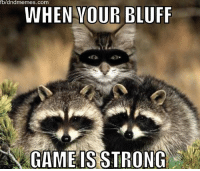 Meme, Memes, and Game: bland memes. Com  WHEN YOUR BLUFF  ZN GAME IS STRONG Day 5:  The raccoons still think I'm one of them.  #dndcaturday -meg
