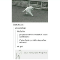 this is awk: bleproxurso  rnol  ni  boy fights:  google street view made half a cat i  cant breathe  it's the fucking middle stage of an  animorph  oh god  excuse me may i pass through here this is awk