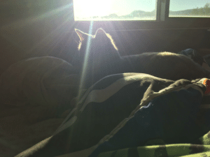 Blessed, Cat, and Presence: Blessed be we, those in the presence of the great cat