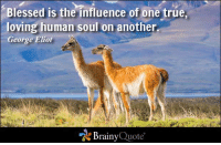 Blessed is the influence of one true, loving human soul on another. - George Eliot http://buff.ly/1Ewlk65: Blessed is the influence of one true,  loving human soul on another  George Eliot  Brainy  Quote Blessed is the influence of one true, loving human soul on another. - George Eliot http://buff.ly/1Ewlk65