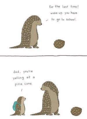 blessed pangolin: blessed pangolin