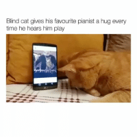 This melts my heart (@hilarious.ted) Credits: @sarperduman: Blind cat gives his favourite pianist a hug every  time he hears him play This melts my heart (@hilarious.ted) Credits: @sarperduman