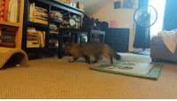 Blind cat zoomies are pretty good too: Blind cat zoomies are pretty good too