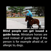 Dogs, Horses, and Memes: Blind people can get issued a  guide horse. Miniature horses are  used instead of guide dogs if the  person is for example afraid of, or  allergic to, dogs.