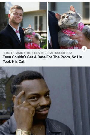 Blog, Date, and Cat: BLOG.THEANIMALRESCUESITE. GREATERGOOD.COM  Teen Couldn't Get A Date For The Prom, So He  Took His Cat …