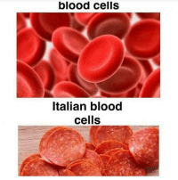 That's a spicy meatball italiano heymambo: blood cells  Italian blood  cells That's a spicy meatball italiano heymambo