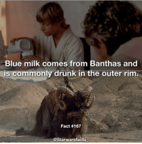 Drunk, Memes, and Blue: Blue milk comes from Banthas and  TS commonly drunk in the outer rim.  Fact #167  @Starwars facts It can also be seen in Rogue One! starwarsfacts