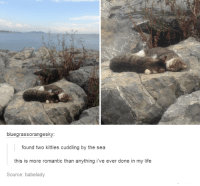Kitties, Life, and Humans of Tumblr: bluegrassorangesky:  found two kitties cuddling by the sea  this is more romantic than anything i've ever done in my life  Source: babelady