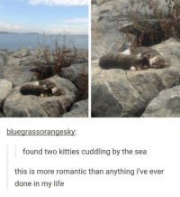 Kitties, Life, and Memes: bluegrassorangesky:  found two kitties cuddling by the sea  this is more romantic than anything i've ever  done in my life