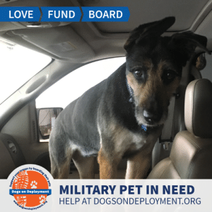 Cats, Dogs, and Love: BOARD  FUND  LOVE  Bearding their pet  your troops by a  MILITARY PET IN NEED  Dogs on Deployment  HELP AT DOGSONDEPLOYMENT.ORG  dožsondeployment.ors Sasha hails from #Coronado #CA and needs a boarder until the beginning of August. She is a senior pup (13.5 years) who gets along with kids and other dogs - but not cats! Sasha enjoys walks and lounging. Can you help?  Location: Coronado, CA Date: June 23, 2019 - August 2, 2019  Pet's Name: Sasha Breed: Airedale Gender: Spayed Female Size: Large (46-65 lbs) Age: Senior (9+ years)  Visit https://www.dogsondeployment.org/profile/12879 to learn more about us, register and contact our owner! (Must be registered and logged on to view all information!)