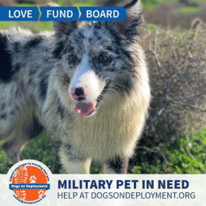 Dogs, Love, and Memes: BOARD  LOVE  FUND  boarding their pets  ort your troops by  MILITARY PET IN NEED  Dogs on Deployment  HELP AT DOGSONDEPLOYMENT.ORG  idogsondeployment.ors Bailey hails from #SanDiego and needs a temporary home until August! She loves playing fetch, playing with other dogs,  and meeting new people! Can you help?  Location: San Diego, CA Date: June 22, 2019 - August 2, 2019  Pet's Name: Bailey Breed: Australian Shepherd Gender: Spayed Female Size: Medium (21-45lbs) Age: Adolescent (1-4 years)  Visit https://www.dogsondeployment.org/profile/52586 to learn more about us, register and contact our owner! (Must be registered and logged on to view all information!)