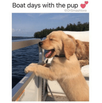 How carefree I would be if I were actually carefree and didn't work seven days a week 365 days a year DisMoneyAinGonMakeItself IllVacationWhenImDead 🤗😂😂😂: Boat days with the pup  @DrSmashlove How carefree I would be if I were actually carefree and didn't work seven days a week 365 days a year DisMoneyAinGonMakeItself IllVacationWhenImDead 🤗😂😂😂