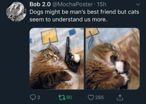 Cats relate by Expose_Everyone MORE MEMES: Bob 2.0 @MochaPoster 15h  Dogs might be man's best friend but cats  seem to understand us more.  3 Cats relate by Expose_Everyone MORE MEMES