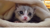 Children, Target, and Tumblr: bodecats:  purrfectsquad:  children-of-bast: Peanut Butter wants to explore but also wants to stay inside his warm blanket. Volume up to hear him purring  HIS NAME IS PEANUT BUTTER