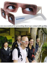 Bokitokijker  one zoos method for preventing direct eye contact with gorillas No eye contact