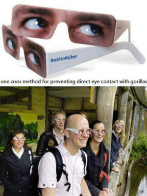 Tumblr, Blog, and Http: BokitoKijker  one zoos method for preventing direct eye contact with gorillas srsfunny:Absolutely No Eye Contact