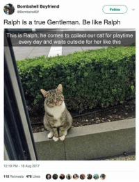 Be Like, True, and Boyfriend: Bombshell Boyfriend  @BombshellBf  Follow  Ralph is a true Gentleman. Be like Ralph  This is Ralph, he comes to collect our cat for playtime  every day and waits outside for her like this  12:19 PM-16 Aug 2017  115 Retweets 476 Likes