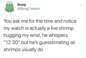 "usually: Boog  @BoogTweets  You ask me for the time and notice  my watch is actually a live shrimp  hugging my wrist, he whispers  ""12:30"" but he's guesstimating as  shrimps usually do"