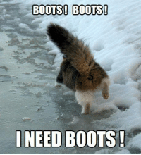 Puss Without Boots!: BOOTS! BOOTS!  NEED BOOTS! Puss Without Boots!