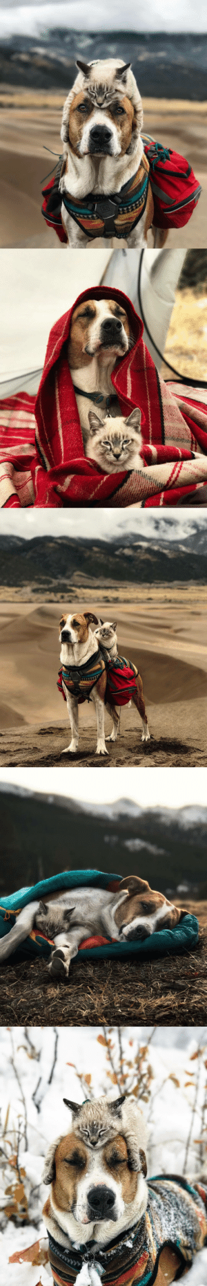 boredpanda:  This Cat And Dog Love Travelling Together, And Their Pictures Are Absolutely Epic: boredpanda:  This Cat And Dog Love Travelling Together, And Their Pictures Are Absolutely Epic