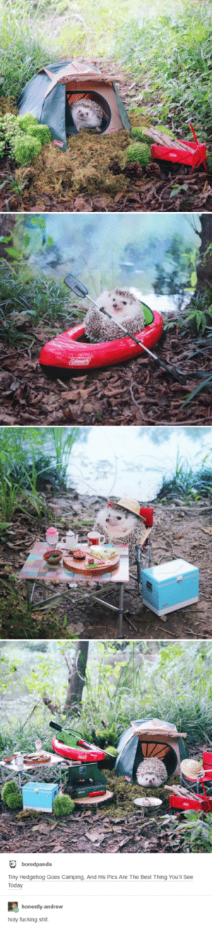 Fucking, Shit, and Best: boredpanda  Tiny Hedgehog Goes Camping, And His Pics Are The Best Thing You'll See  Today  honestly-andrew  holy fucking shit Hes Going on an Adventure!
