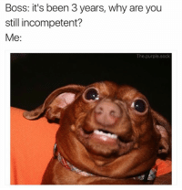 Lol, Memes, and Purple: Boss: it's been 3 years, why are you  still incompetent?  Me:  The.purple.sock Lol what (@the.purple.sock)