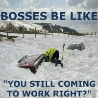 Bosses Be Like: BOSSES BE LIKE  YOU STILL COMING  TO WORK RIGHT?!